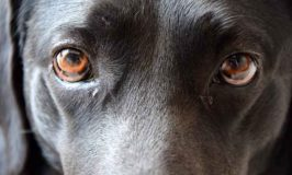Should You Look Your Dog In The Eyes?