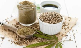 An Overview Of Hemp Oil For Dogs
