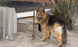 What To Do If You See A Tethered Dog