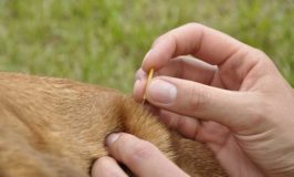 Traditional Chinese Medicine For Dogs