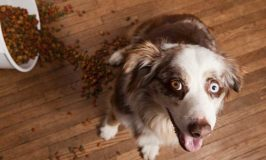 How To Protect Your Dog From Dog Food Recalls