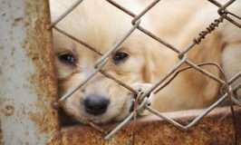 Why You Should Avoid Pet Stores Selling Puppies