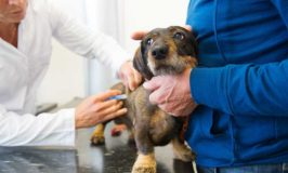 Should You Vaccinate Your Puppy?