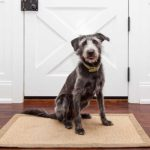 Does Permission-Based Dog Training Work?