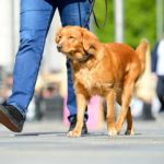What Is The AKC Canine Good Citizen Test?