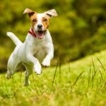 4 Dog Training Cues Every Dog Should Know