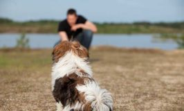 Solutions To Common Dog Training Mistakes