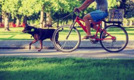 7 Tips For Bike Riding With Your Dog
