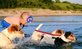 7 Tips for Bringing Your Dog to the Beach