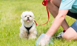 Natural Ways To Dispose Of Dog Poop
