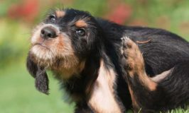 Does Your Dog Have Fleas?