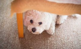 Your Dog Is Anxious, Now What?