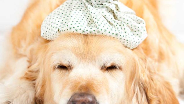 Ice Therapy For Dogs