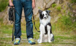 How And When To Use A Long Dog Leash