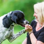 Use A Positive Interrupter Cue To Stop Bad Dog Behavior