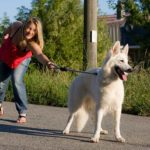 Does Your Dog Pull On Leash? Ditch The Leash