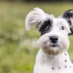Dog Training Tips For Annoying Dog Behaviors