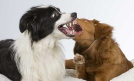 Dog On Dog Aggression In The Home