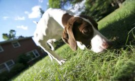 Should Dogs Be Left Outdoors Unattended?