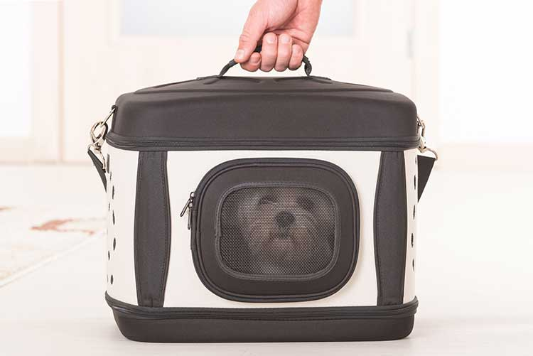 Portable Dog Carriers