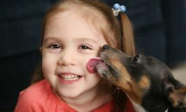 5 Safety Tips For Dogs And Children