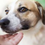 Dog Eye Discharge: When Is It An Issue?