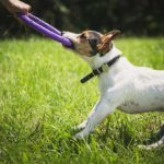 Tug Toy Safety Tips For Your Dogs