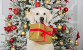 Best Christmas Gifts For Dogs 2017