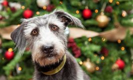2017 Christmas Gift Ideas For Senior Dogs