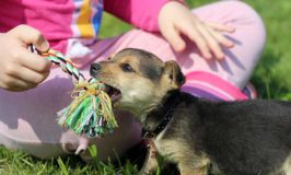 Children And Puppies: Keeping Everyone Safe And Happy