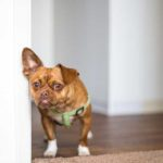Is Your Dog Aggressive When Startled?