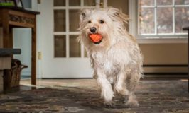 High Tech Dog Toys To Keep Your Dog's Brain Busy