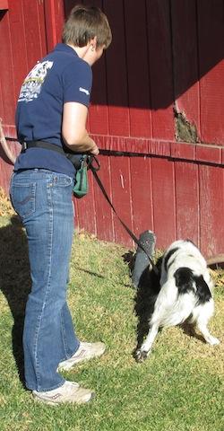 how to teach dog on leash