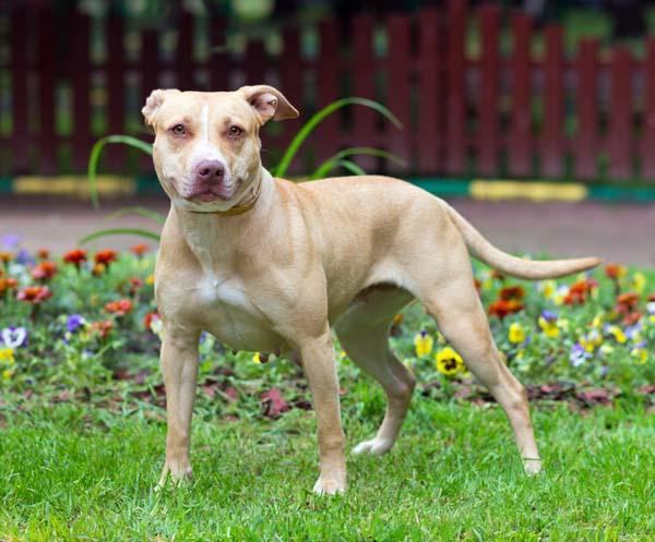 Tough Dog Breeds To Train