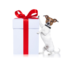 gifts for dog lovers gift giving ideas dog training nation