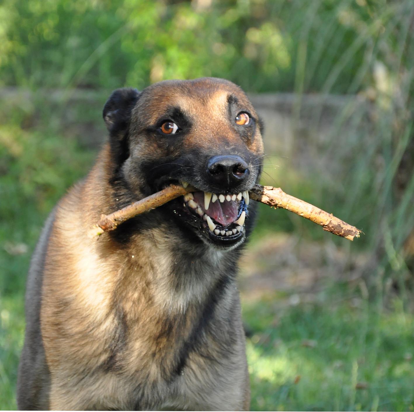 Easy Dog Training Tips