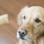 Teaching Older Dog To Walk On Leash