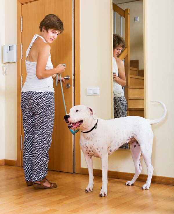 Training Dogs Polite Greeting Behavior Dog Training Nation