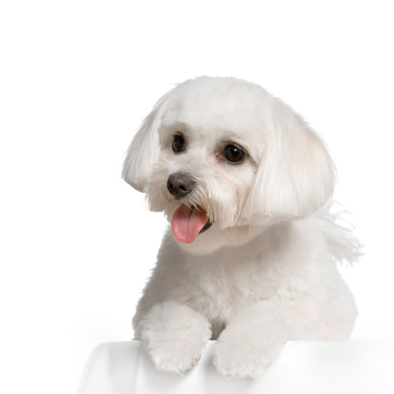 Best Whiting Shampoos For Dogs Archives Dog Training Nation