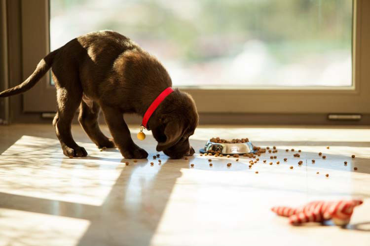 How To Keep Dogs From Eating Your Stuff