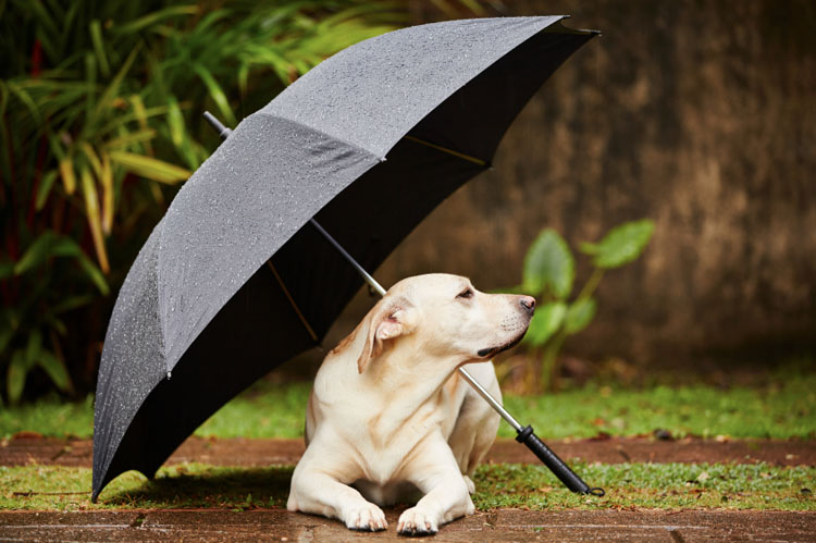 My Dog Refuses To Potty In The Rain Dog Training Nation