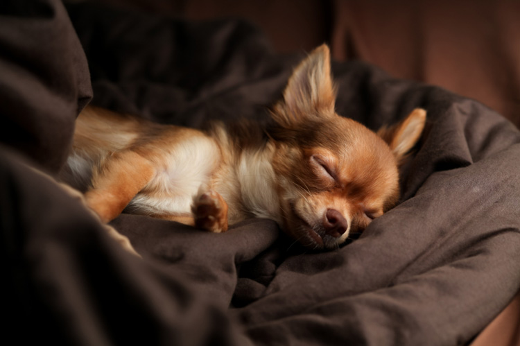 New Year S Eve Dog Safety Tips