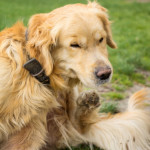 Flea Products For Dogs With Seizures Dog Training Nation