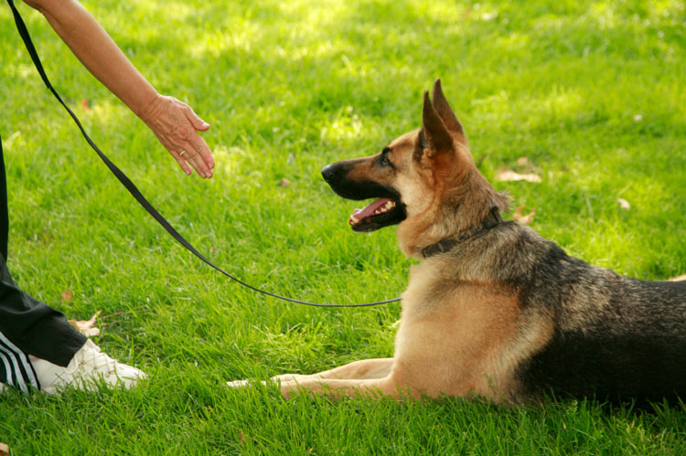 Why Group Dog Training Classes are Worth It