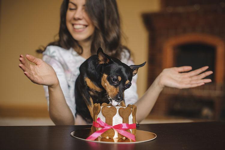 4 Dog Birthday Cake Ideas Your Will Love