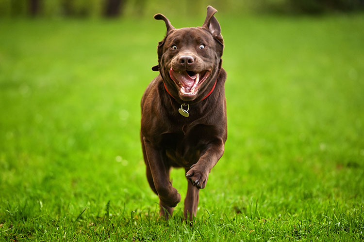 Wonder Dog Training