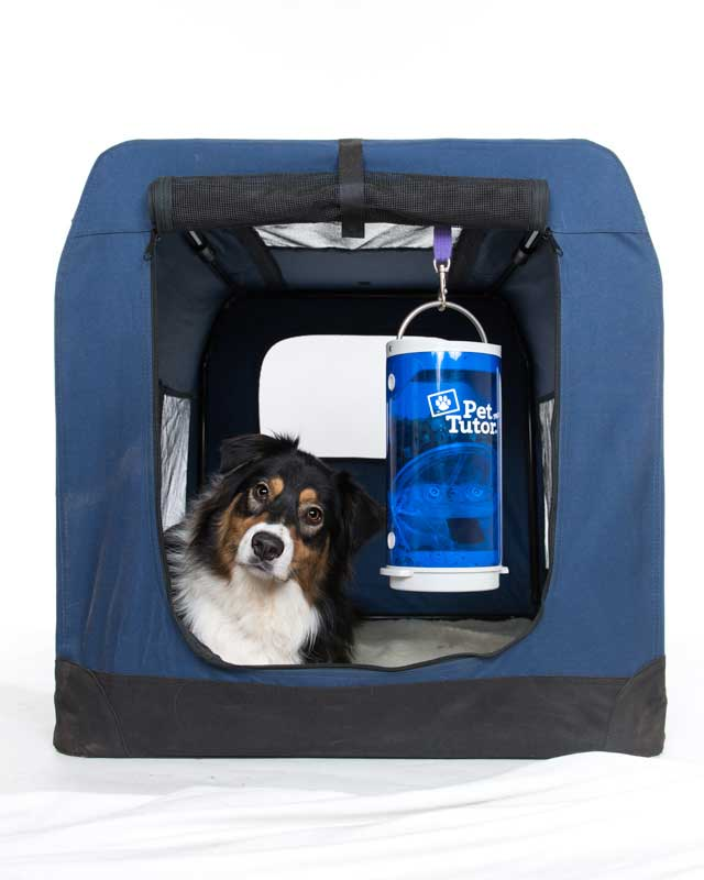 remote dog treat dispenser