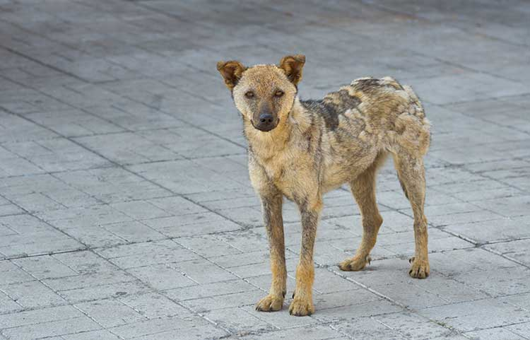 Information About Stray Cats And Dogs