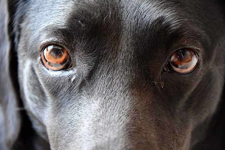Should You Look Your Dog In The Eyes? | Dog Training Nation