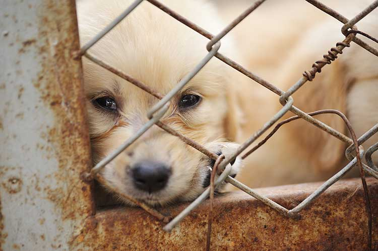 Avoid Pet Stores That Sell Puppies Dog Training Nation